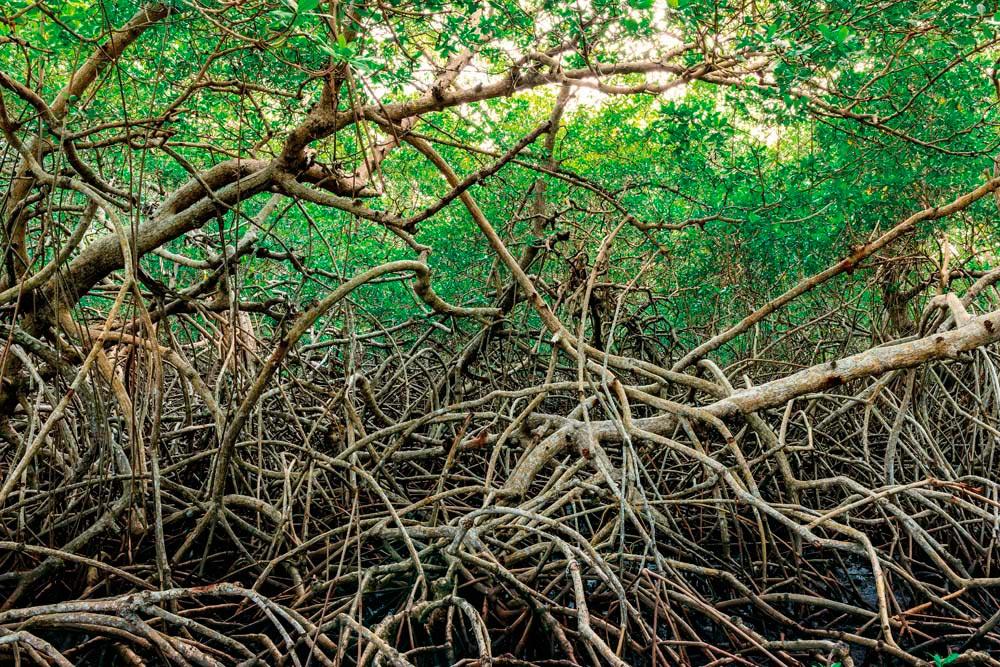 Tobago's mangrove wetlands are a refuge for wildlife. Altin Osmanaj / Shutterstock.com