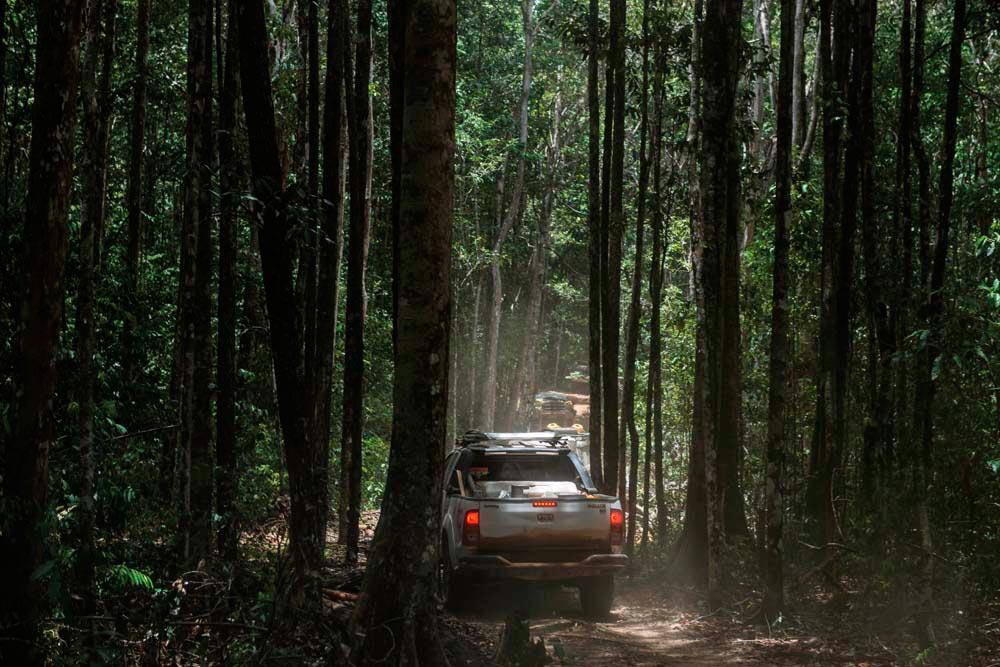 The Pakaraima safari route cuts through both dense forest and open savannah. Photo by Nikhil Ramkarran