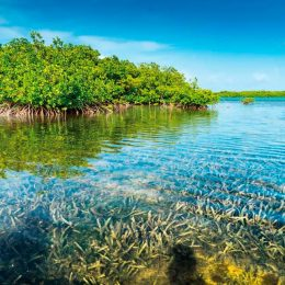 Mangrove-lined seashore in Bonaire. Photo by Gail Johnson/Shutterstock.com
