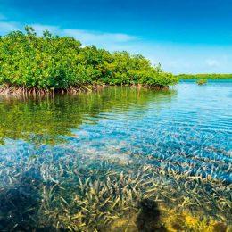 Mangrove-lined seashore in Bonaire. Photo by Gail Johnson/Shutterstock.com