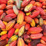 The chocolate revolution in Trinidad & Tobago | Cookup