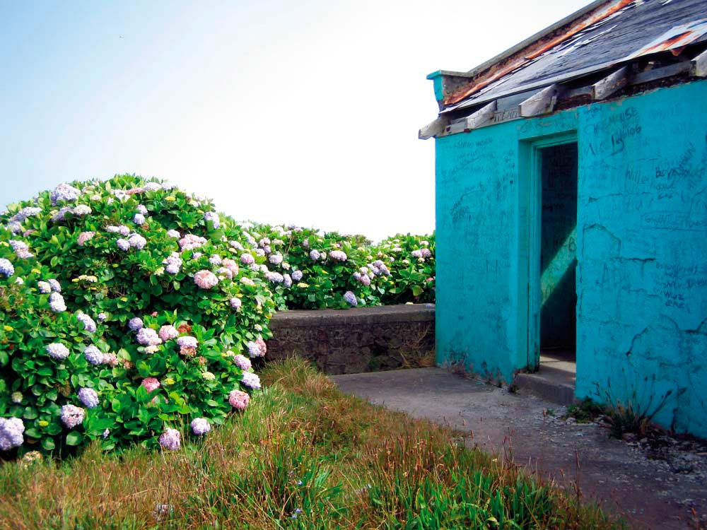 Near the summit, a semi-ruined shelter is surrounded by hydrangea bushes. Photo by Nicholas Laughlin