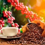 Best of brew — Caribbean coffee | Cookup