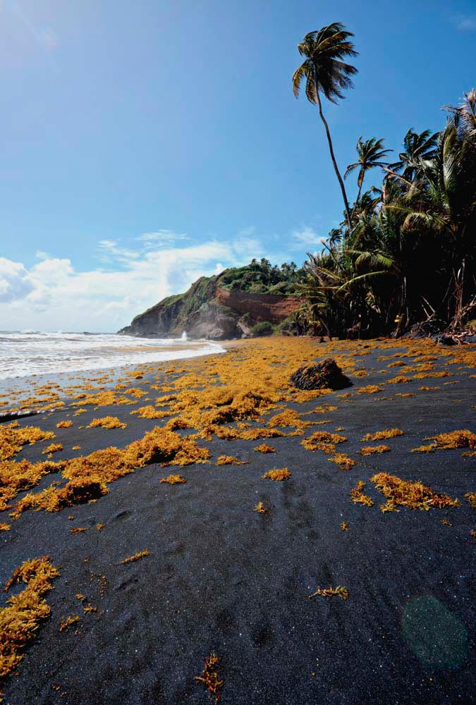 St Vincent's volcanic geology means that its windward coast is scattered with natural black-sand beaches. Photo by Kay Wilson