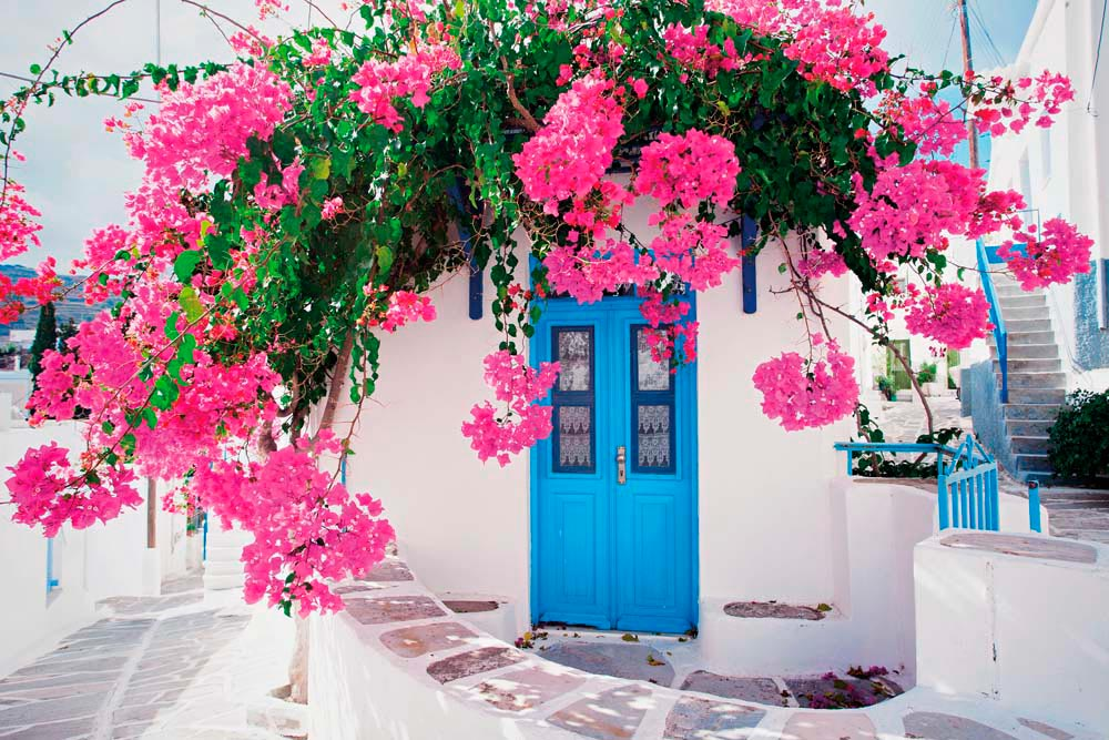 A typical sight in the village of Lefkes on Paros: whitewashed walls, blue door, profusion of bougainvillea. Photo by Kite_rin/Shutterstock.com