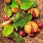 Nutmeg: spice of the season | Parting Shot