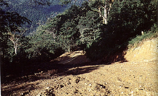 Bare ridges show the scars of deforestation. Photograph by Colin P. Clubbe