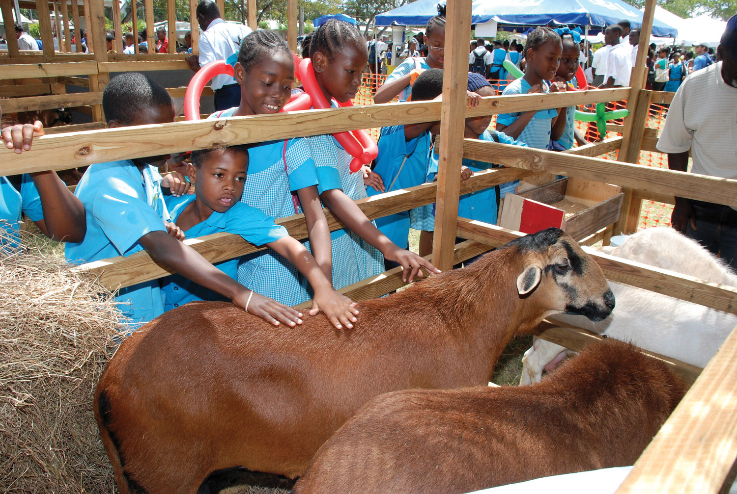 Children petting sheep at one of the many exhibits at Agrofest. Photograph courtesy AGROFEST 2010