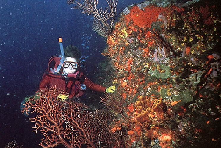 Diving in Tobago