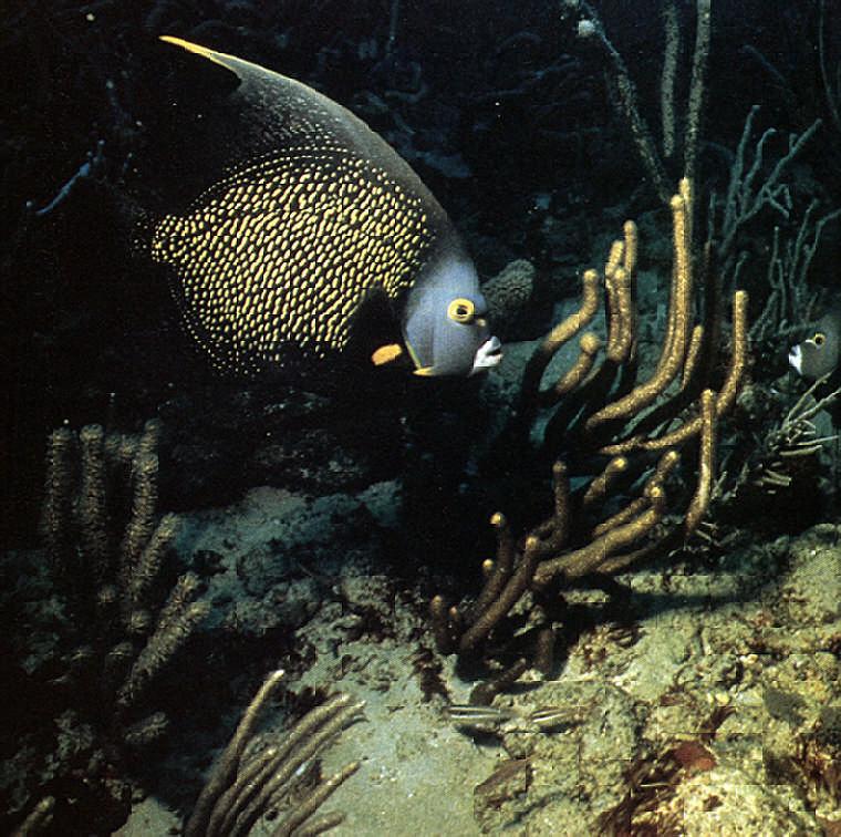Diving off Tobago