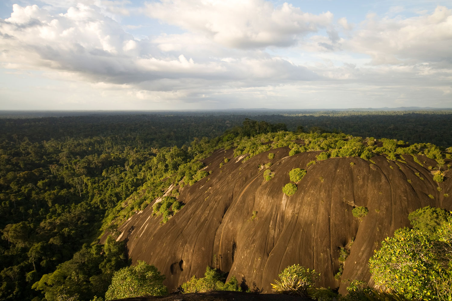 The Central Suriname Nature Reserve from the Voltzberg Dome. Photograph by Andy Isaacson