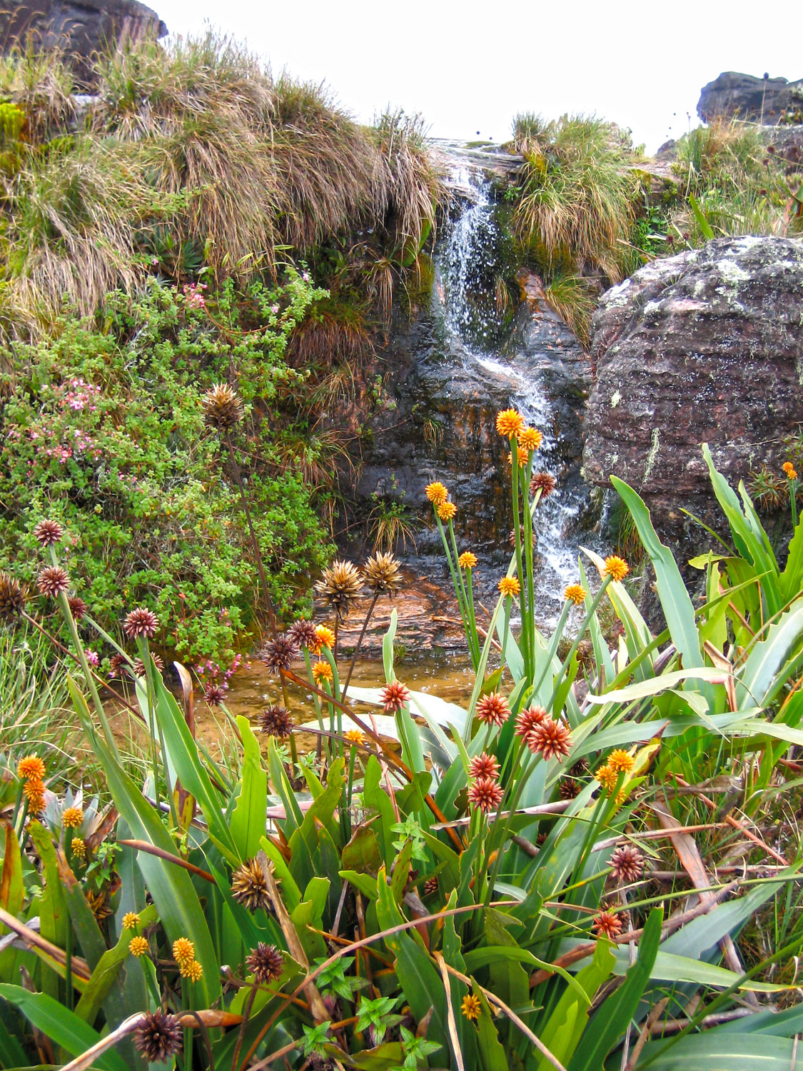 This little waterfall and pool served as our 'shower' at 'Hotel Basilio'. Photograph by Nicholas Laughlin