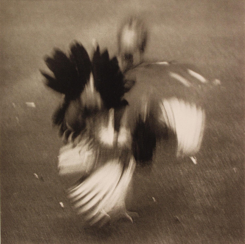 Cockfight (1983) by Héctor Méndez Caratini. Image courtesy El Museo Del Barrio