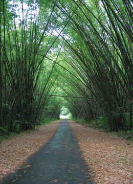 """The """"bamboo cathedral"""" in Tucker Valley. Photograph by Ranji Ganase"""