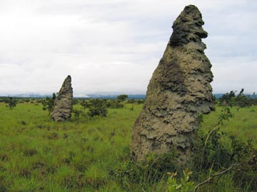 Giant termite mounds, a dozen feet tall, tower over the savannah. Photograph by Philip Sander
