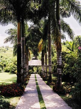 Towering royal palms lead to the garden pavilion