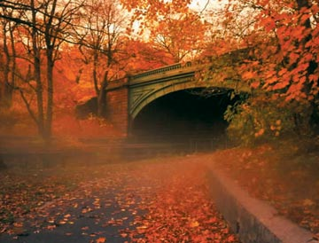 Bridge in Prospect Park. Photograph by Sol McCants