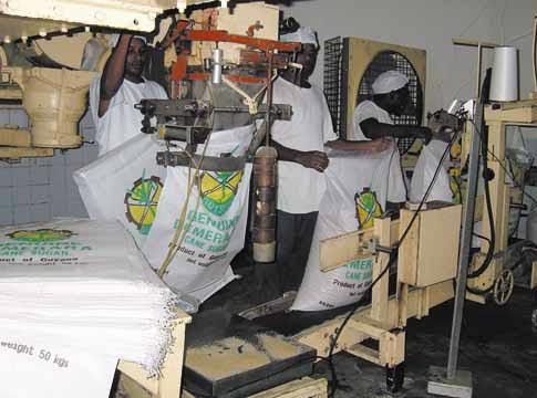 Bagging Guyana Demerara sugar. Photograph courtesy the Guyana Sugar Corporation (Guysuco)