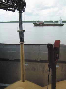 Photograph courtesy the Guyana Sugar Corporation (Guysuco)