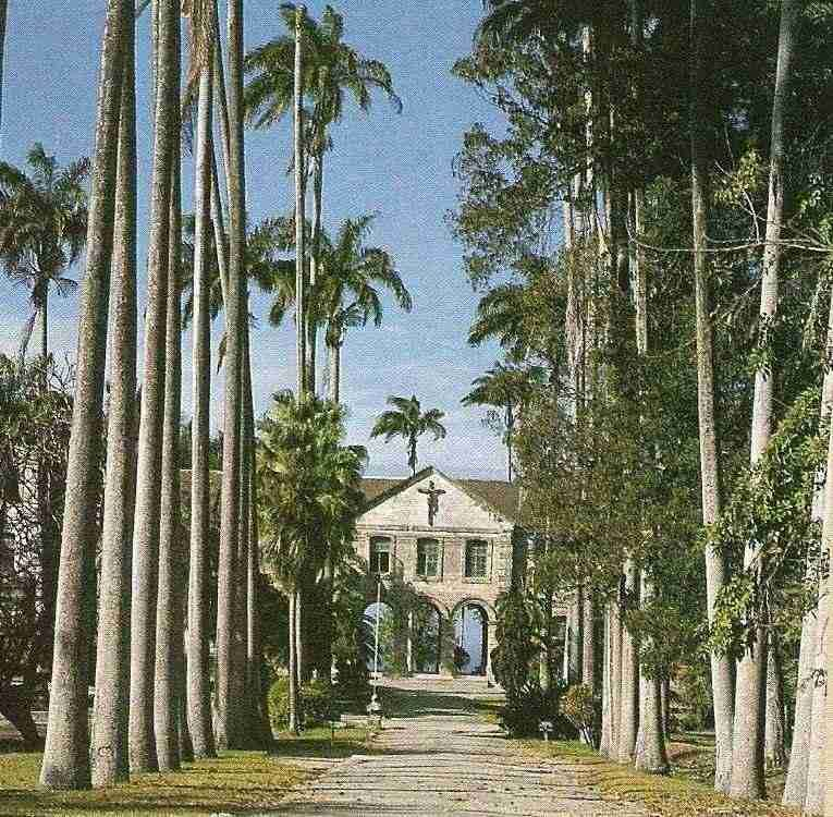 Codrington College: the majestic driveway. Photograph by Felix Kerr