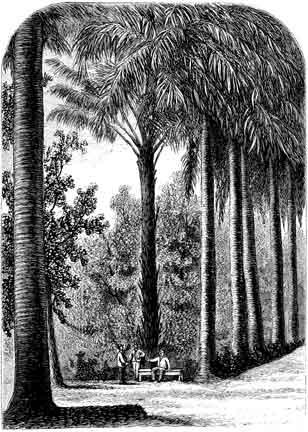 Illustration courtesy Signal Books