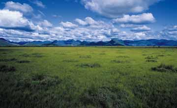 View of the Rupununi Savannah. Photograph by South America Team/Foto Natura