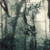 Rain forest, Morne Bleu. Photograph by Courtenay Rooks