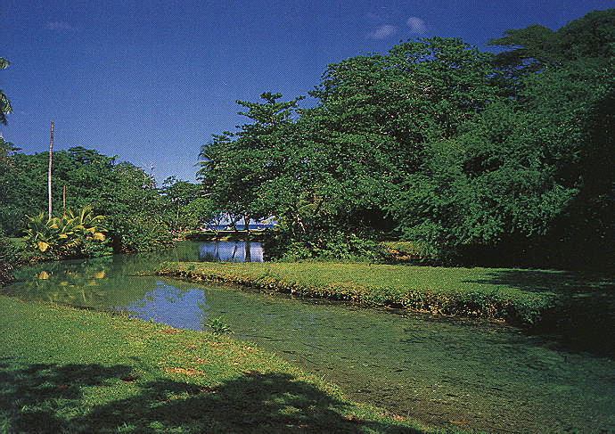 Frenchman's Creek near Port Antonio. Photograph by Mike Toy