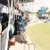 Antigua's most famous cricket fan, Gravy. Photograph by Thaddeus Price